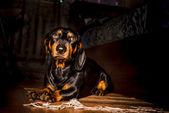The dog — Stock Photo