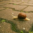 Slowly Snail — Stock Photo