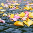 Flower petals — Stock Photo