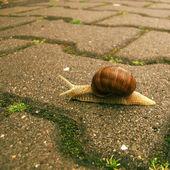 Slowly Snail — Stock Photo