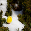 Stock Photo: Lonely chick on snow