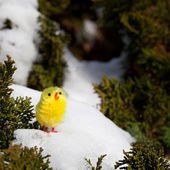 Lonely chick on the snow — Stock Photo