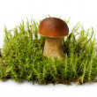 Stock Photo: Brown edible boletus on green moss