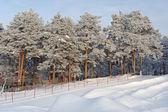 Vergnügungspark mit nadelbäumen im winter — Stockfoto