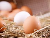 Eco chicken eggs — Stock Photo