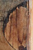 Old wood — Foto de Stock
