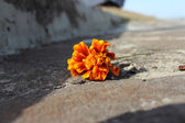 Orange colored flower on the road — Stock Photo
