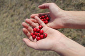 Girls hands with berries of the briar — Stock Photo