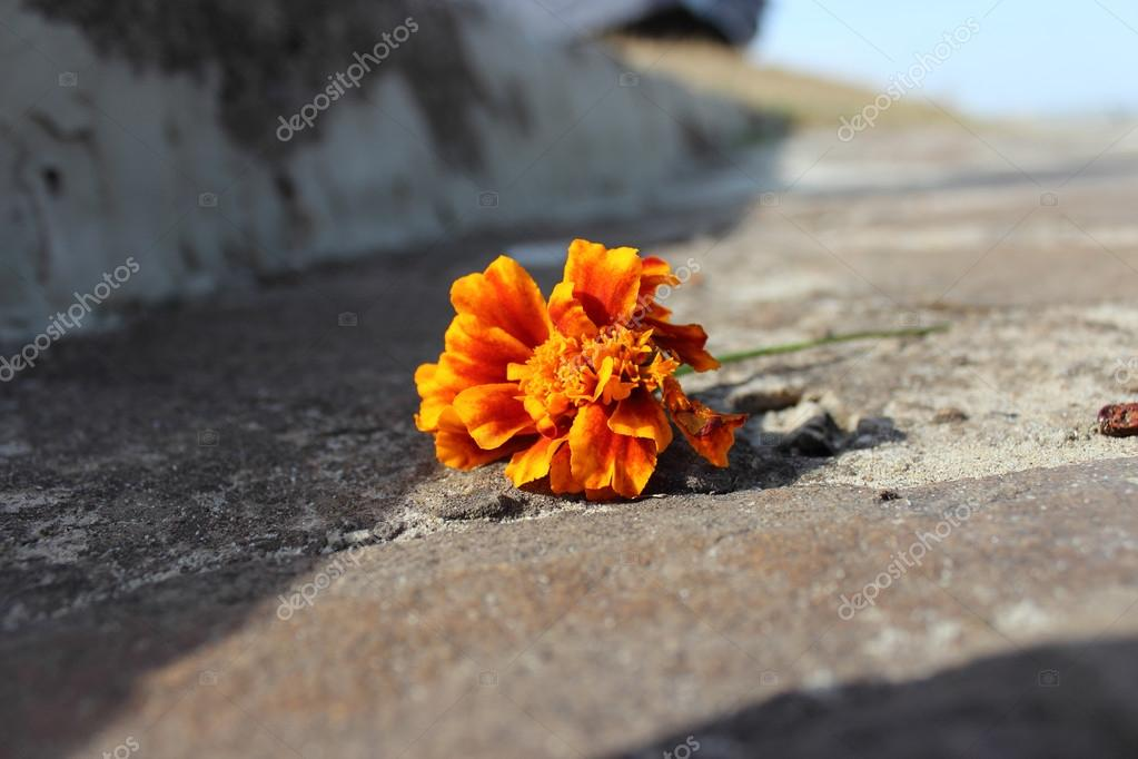 Orange colored flower on the road — Foto de Stock   #18232273