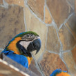 Parrot in the zoo - Stock Photo