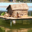 Duck and duckling house on the river - Stock Photo