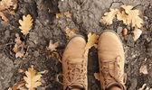 Autumn background — Zdjęcie stockowe