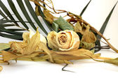 The dried flower of a rose, petals, leaves. — Stock Photo