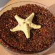 Starfish and flax seeds. — 图库照片