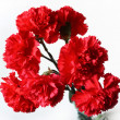 Stock Photo: Red carnations.