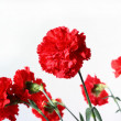 Red flowers. - Stock Photo