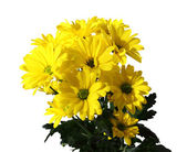 Flowers yellow. — Stock Photo