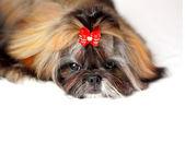 Muzzle of a dog. — Stock fotografie