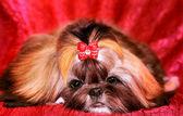 Muzzle of a dog. — Foto Stock