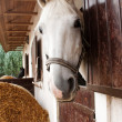 Horse looking out of the stable window — Stock Photo