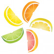 Citrus slices — Stock Vector #16624597