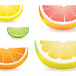 Citrus slice variety — Stock Vector #16624605