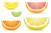 Citrus slice variety — Stock Vector