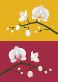 Orchid branch — Stock Vector