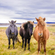 Icelandic horses — Stock Photo #38506235