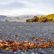 Icelandic beach with black lavrocks, Snaefellsnes peninsula, Iceland — Stockfoto #38642993