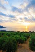 Wide view of a Cretan landscape, island of Crete, Greece — Stock Photo