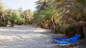Famous palm beach of Vai, island of Crete, Greece — Stock Photo