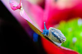 Macro shot of a snail on an colorful exotic plant — Stock Photo