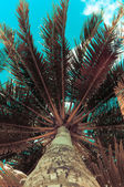 Palm tree with Retro summer filter effect — Stock Photo