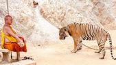 Buddistisk munk med en bengalisk tiger på tiger temple i kanchanaburi, thailand — Stockfoto