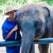 Постер, плакат: Mahout and his elephant at Samphran Elephant Ground &amp Zoo in Nakhon Pathom Thailand