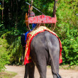 Постер, плакат: Mahout and his elephant at Samphran Elephant Ground & Zoo in Nakhon Pathom Thailand