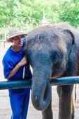 Mahout and his elephant at Samphran Elephant Ground & Zoo in Nakhon Pathom,Thailand — Stock Photo