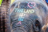 Close-up shot of Asian elephant head — Stock fotografie