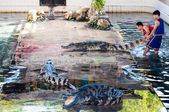 Crocodile show at Samphran Crocodile Farm in Nakhon Pathom,Thailand — Stock Photo