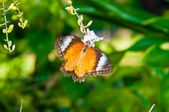 View of Colorful Orange butterfly in summer time — Foto de Stock