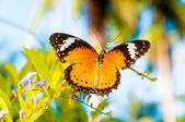 View of Colorful Orange butterfly in summer time — Foto Stock