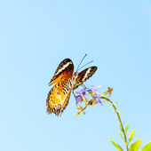 View of Colorful Orange butterfly in summer time — ストック写真