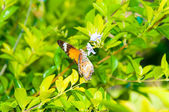 View of Colorful Orange butterfly in summer time — Stock Photo