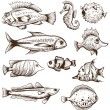 Stock Vector: Set of fishes isolated on white backgrounds