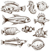 Set of fishes isolated on a white backgrounds — Wektor stockowy