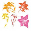 Hand drawn lilly flowers vector set — Stock Vector