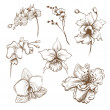 Hand drawn orchid flowers vector set — Stock Vector #27629593