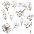 Hand drawn tulips flowers vector set — Stock Vector
