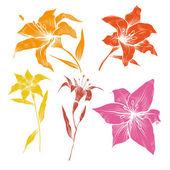 Conjunto del vector flores lilly dibujados a mano — Vector de stock